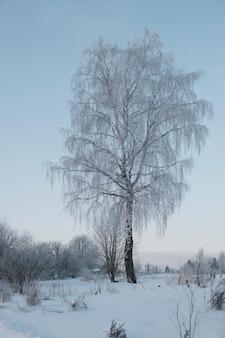 Prachtige natuur van het noorden, natuurlijk landschap met grote bomen in de ijzige winter