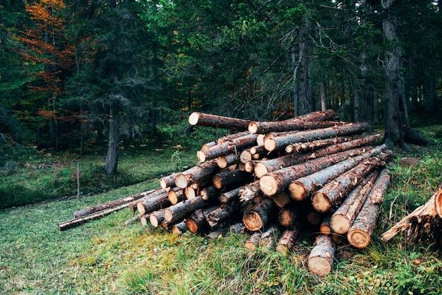 Prachtige natuur. vers geoogste houten logboeken gestapeld in een stapel in het groene bos