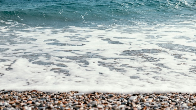 Prachtige natuurlijke rijkdommen van de zee