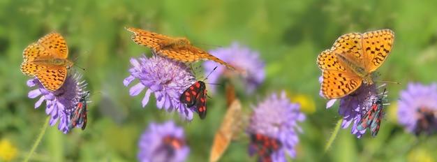 Prachtige oranje vlinder en kleine rode en zwarte insecten die roze bloemen verzamelen