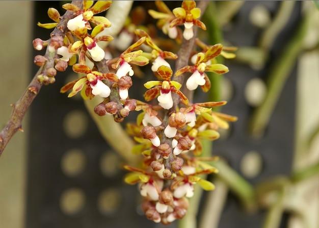 Prachtige orchideeën thailand botanische tuin