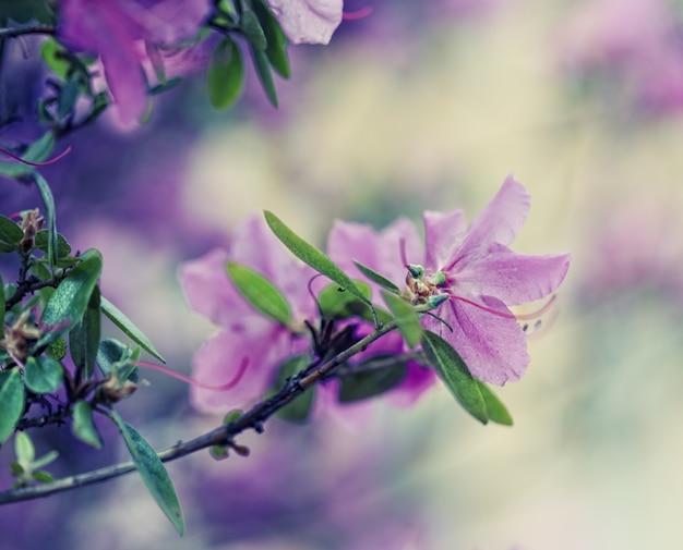Prachtige paarse bloemen in de tuin