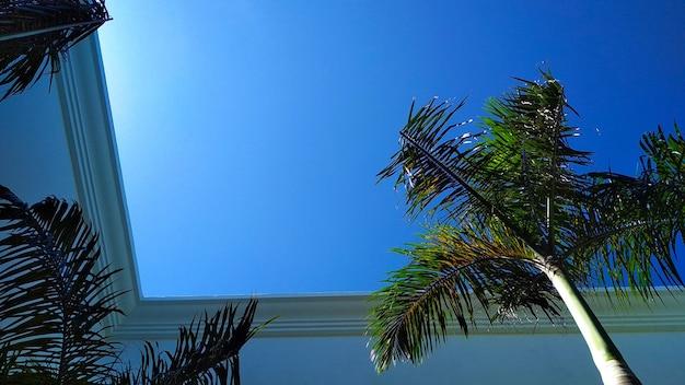 Prachtige palmbomen tegen de blauwe lucht