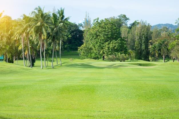 Prachtige palmboom en tuin