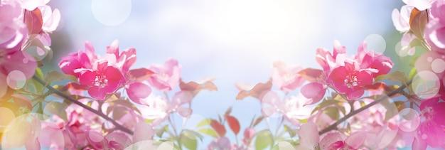 Prachtige panoramische lentebanner met roze bloemen