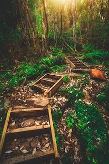Prachtige regenwoud jungle in tasmanië, australië