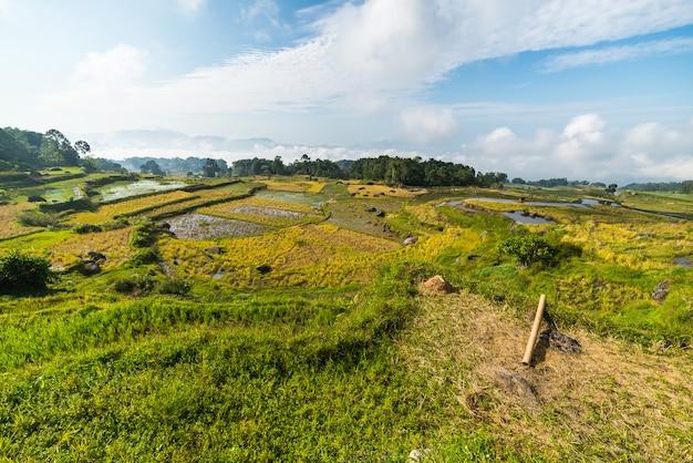 Prachtige rijstvelden landschap