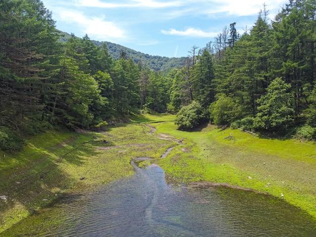 Prachtige rivier met rondom een dennenbos en blauwe lucht
