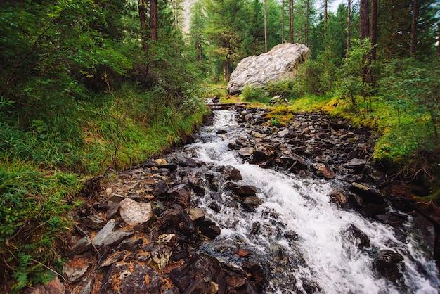 Prachtige snelle waterstroom in wilde bergkreek. geweldig schilderachtig groen boslandschap. rijke vegetatie en grote steen dichtbij beek. sfeervol landschap van hooglanden. prachtige bergen natuur.
