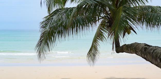 Prachtige tropische oceaan met wit zand, helder water en kokospalm in de ontspannen sfeer