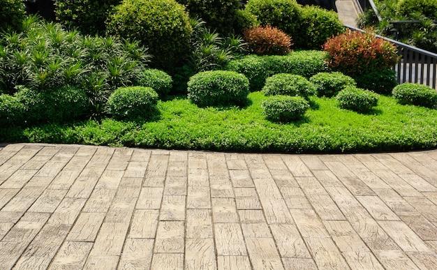 Prachtige tuin en plant in het zomerseizoen