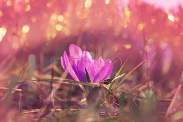 Prachtige tuin lentebloemen