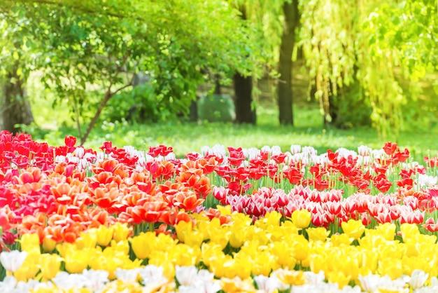 Prachtige tulpentuin in het groene park