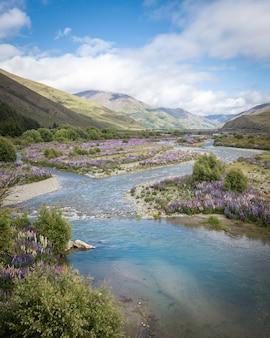 Prachtige vallei vol met lupines met rivier die tussen de bergen stroomtahururiri rivier nieuw-zeelan