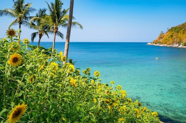 Prachtige velden met zonnebloemen in de zomer met kust prachtige zee turquoise wateroppervlak en coconut palmbomen in zomer landschap op phuket thailand.