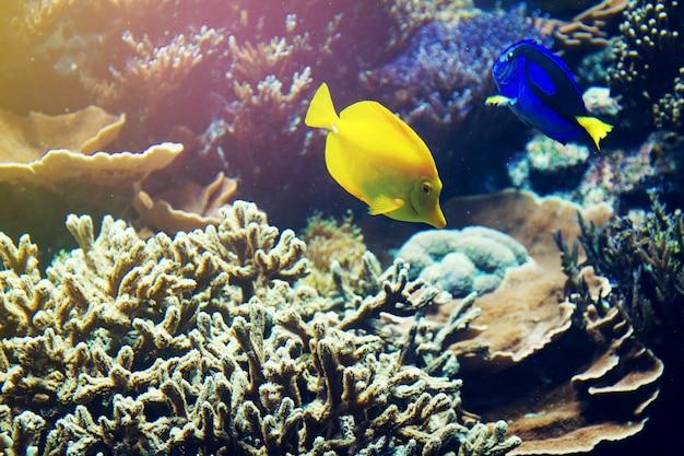 Prachtige vissen rode zee koraal dier. horizontaal met kopieerruimte.