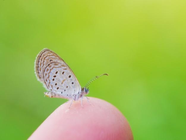 Prachtige vlinder bij de hand met onscherpe achtergrond in de natuur