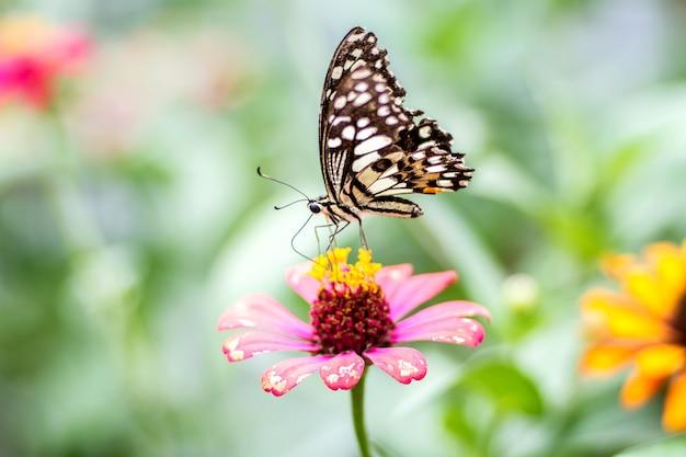 Prachtige vlinder met bloem en onscherpe achtergrond
