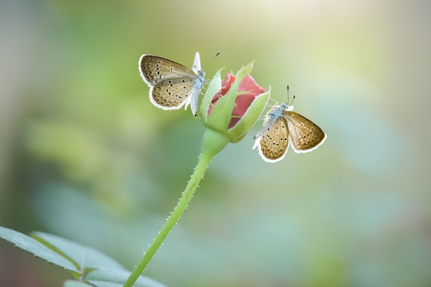 Prachtige vlinder op bloem in tropische tuin