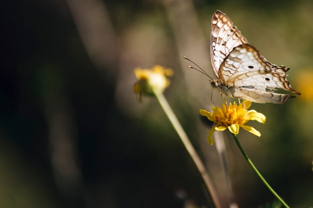 Prachtige vlinder op bloem