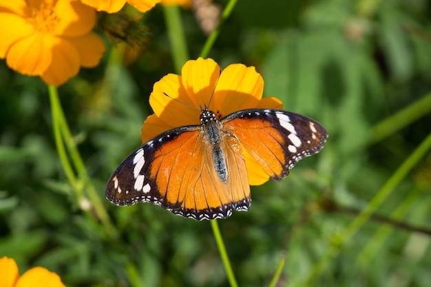 Prachtige vlinder op de bloemplant