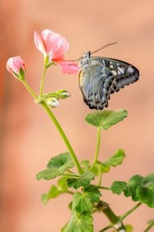 Prachtige vlinder op groene bloem doorbladert geïsoleerd, close-up