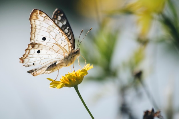 Prachtige vlinder op paardenbloem
