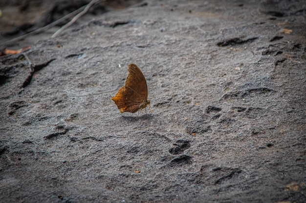 Prachtige vlinder op steen van waterval in de natuur, kleurrijke vlinder insect in de natuur.
