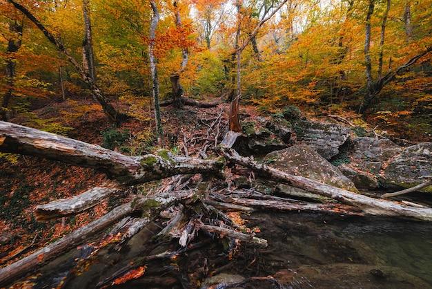 Prachtige waterval in de herfst bos op een bergbeek