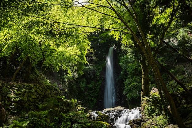 Prachtige waterval ondergedompeld in groen bos met zijn serene sfeer. japan.