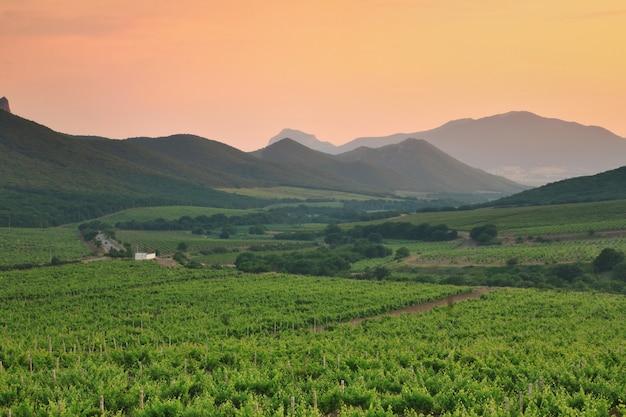 Prachtige wijngaard in bergdal bij zonsondergang.
