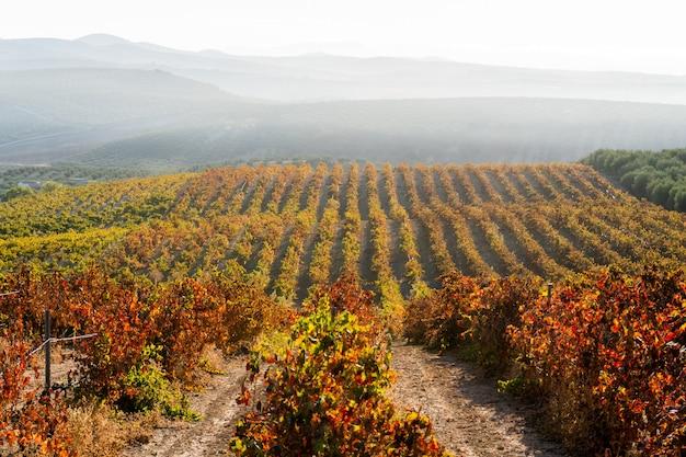 Prachtige wijngaarden op het platteland
