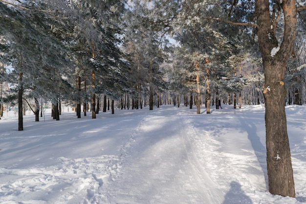 Prachtige winter forest of park in de sneeuw met ruimte voor tekst. ijzige en zonnige dag