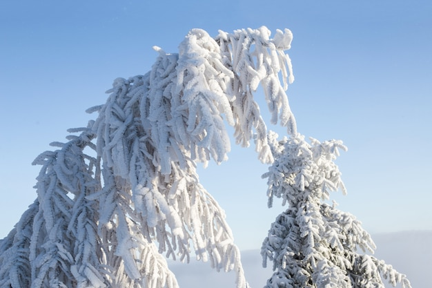 Prachtige winterlandschap met sneeuw bedekte bomen.