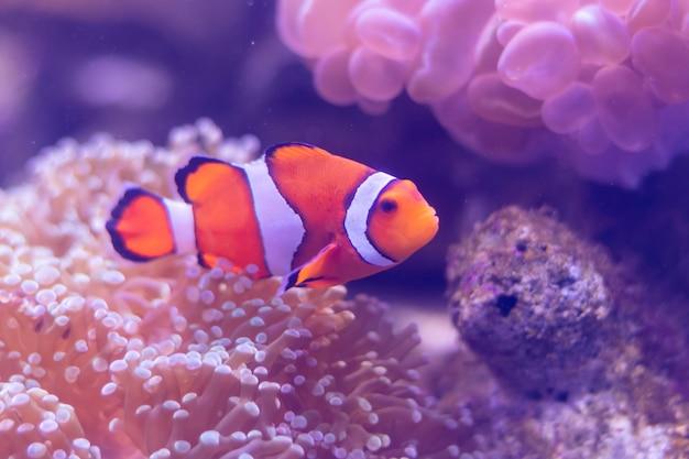 Prachtige zee bloem in onderwaterwereld met koralen en vissen