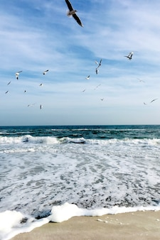 Prachtige zee met meeuwen in de lucht.