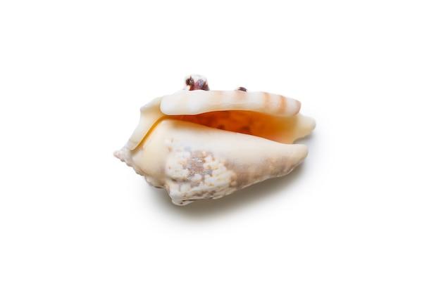 Prachtige zeeschelp geïsoleerd op witte achtergrond