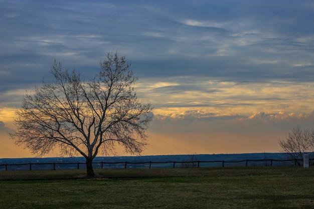 Prachtige zonsondergang met een boom zonder bladeren en een houten hek