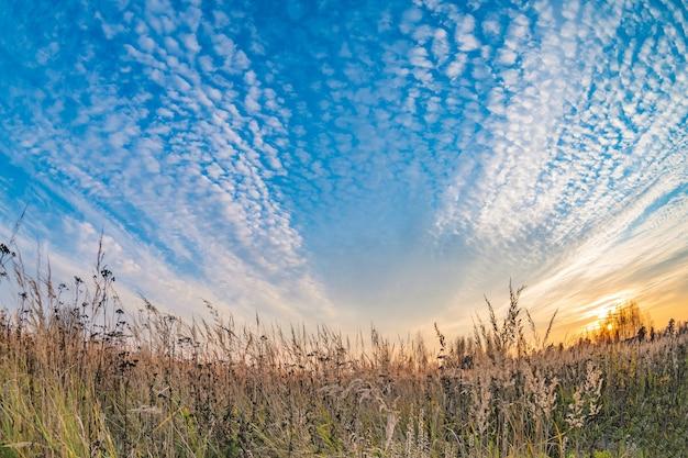 Prairielandschap met grassen, weilanden en een stralend blauwe lucht met witte wolken.