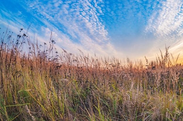 Prairielandschap met hoge grassen, weilanden en een stralend blauwe lucht met witte wolken.
