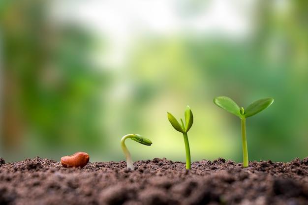 Presentatie van de kiemvolgorde van planten die op aarde groeien, het concept van plantengroei in geschikte externe omgevingen.