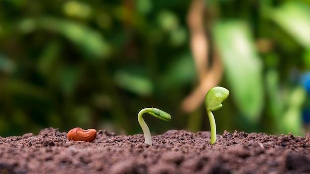 Presentatie van de ontkiemingsvolgorde van planten en het plantengroeiconcept in een geschikte externe omgeving.