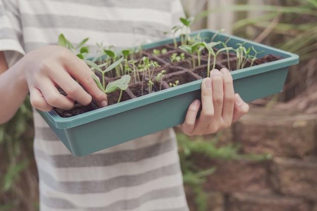 Preteen jongenshanden die zaailingsdienblad, plantaardig tuinieren, pret openluchtactiviteit, duurzaam leven, sociaal afstandsconcept houden