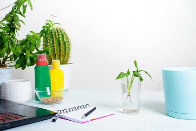 Proces van het planten van een ingemaakte bloem in een pot voor kieming thuis. polesitter voor irrigatie, telefoon en laptop voor online schietproces.