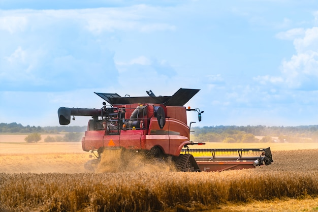 Proces van het verzamelen van rijp gewas uit de velden.