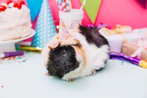Proefkonijn met feesthoed op zijn hoofdzitting dichtbij de verjaardagsdecoratie
