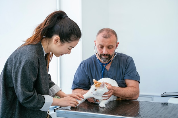 Professionele dierenarts die een volledig onderzoek doet aan een zieke kat. levensstijl met dieren. binnenshuis witte kliniek.