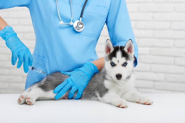 Professionele dierenarts die om kleine hond geeft