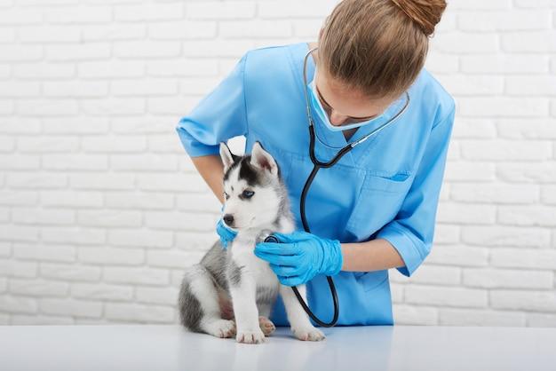Professionele dierenarts die weinig schor puppy met een stethoscoop copyspace huisdieren van de het beroepberoep van huisdierendieren de beroepsgeneeskunde onderzoeken.