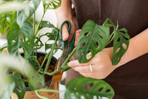 Professionele plantenkweker die een plant verpot